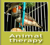 Animaltherapy